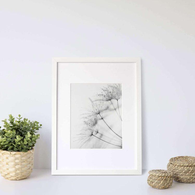 Dandelion Black White poster print Noanahiko W 0126