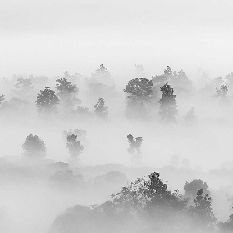 Foggy Forest Tropical Trees Poster noanahiko wall art