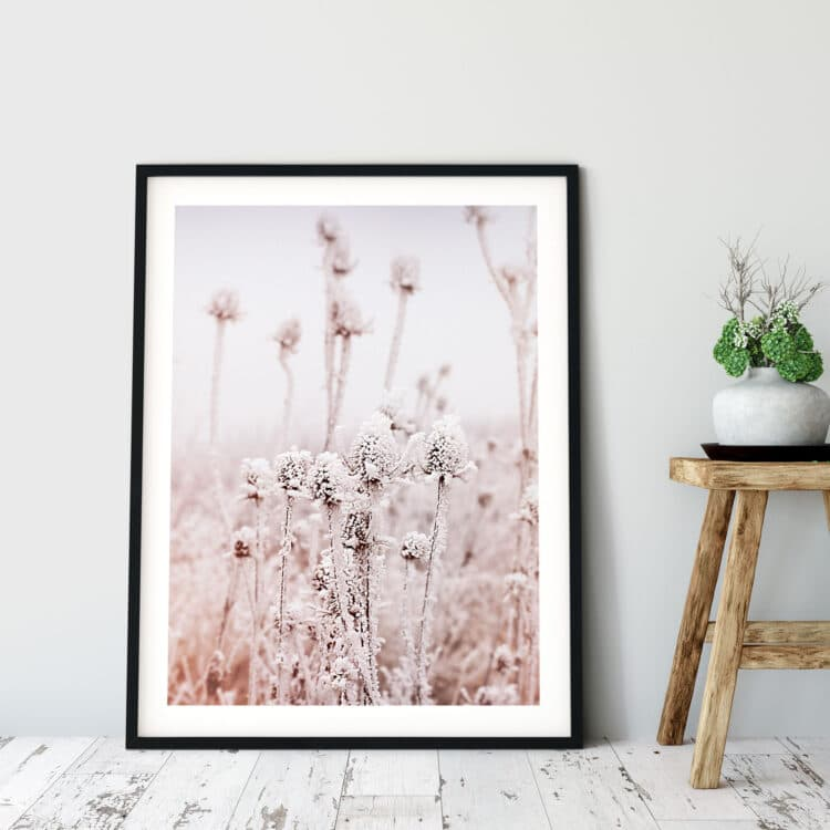 Frosty Dry Herb Poster photography Noanahiko 0136