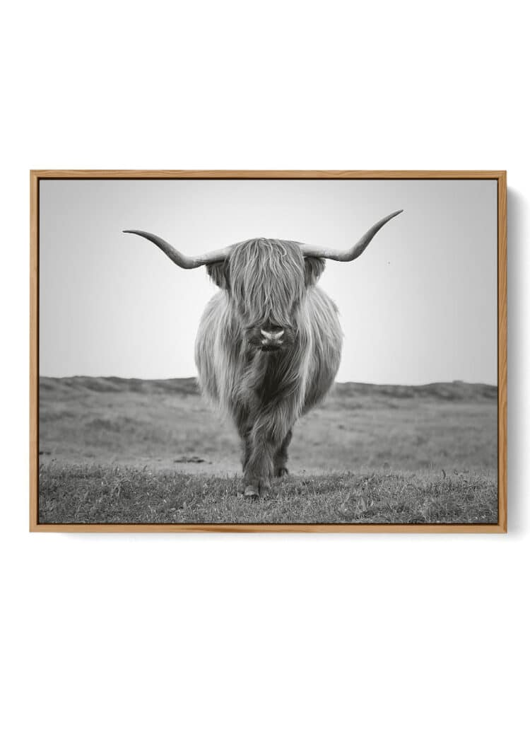 Highland Bull Art Print Poster