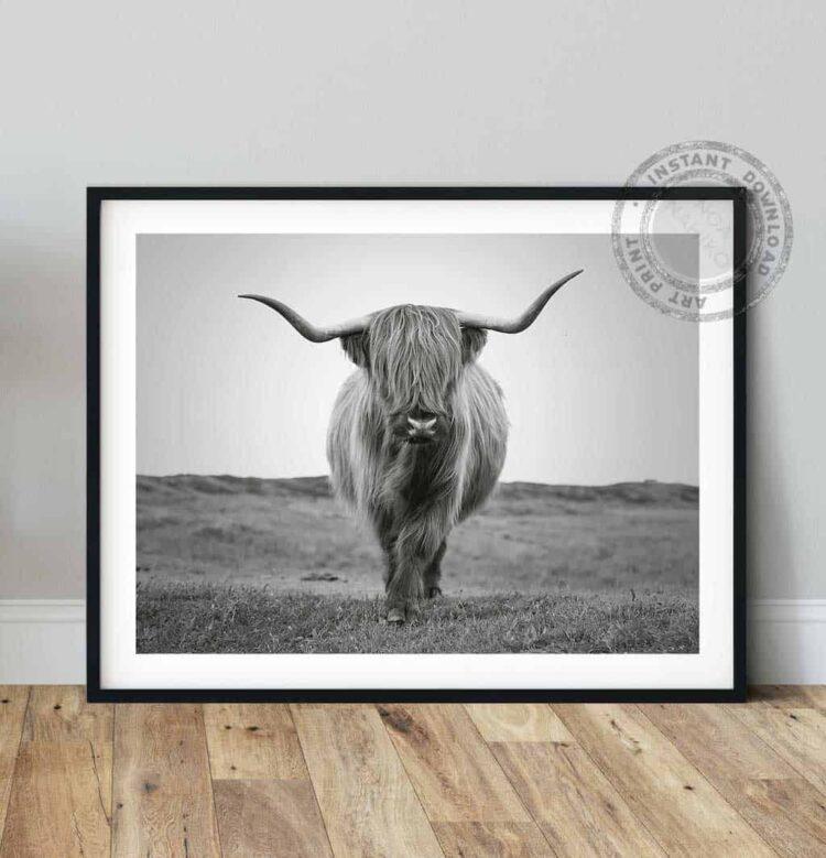 Highland Cattle Bull Poster photo print