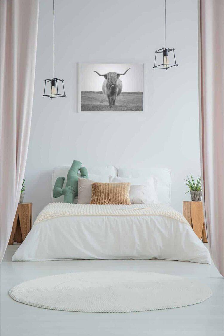 Highland Cattle Bull Poster photo print decor bedroom