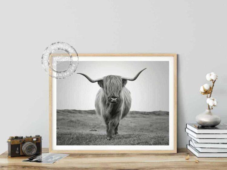 Highland Cattle Bull Poster photo print home decor wall art