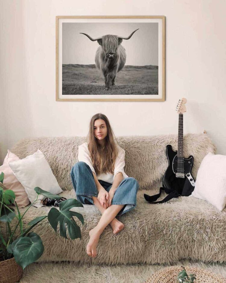 Highland Cattle Bull Poster photo print living room
