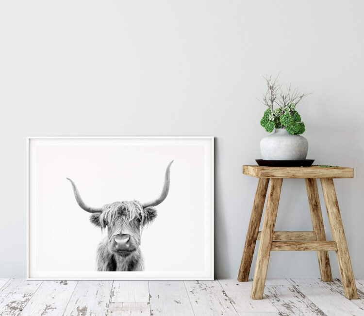 Highland Cow Scotland Noanahiko Photo Print 0153