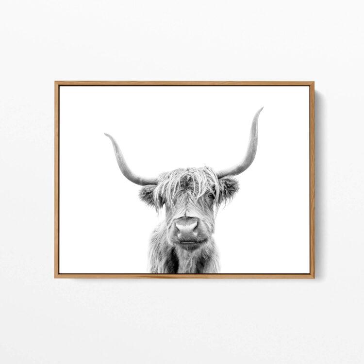 Highland Cow Scotland Noanahiko art 0153