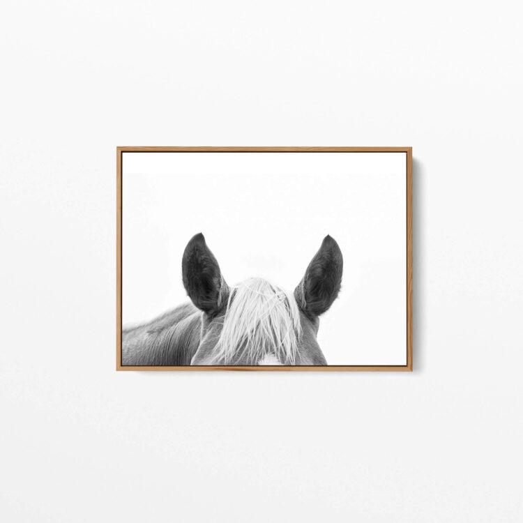 Horse Ears Noanahiko Art Print 0127