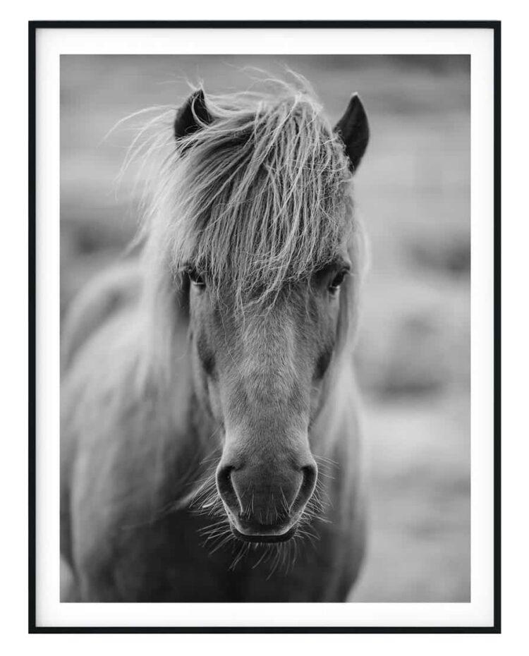 Iceland horse poster wall art Frame