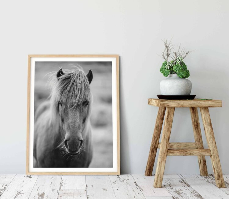 Icelandic Horse Scottland printable poster scaled 1