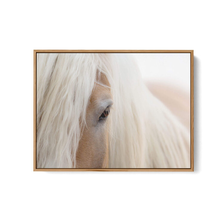 Portrait Haflinger Horse Noanahiko Photo Print web 0180