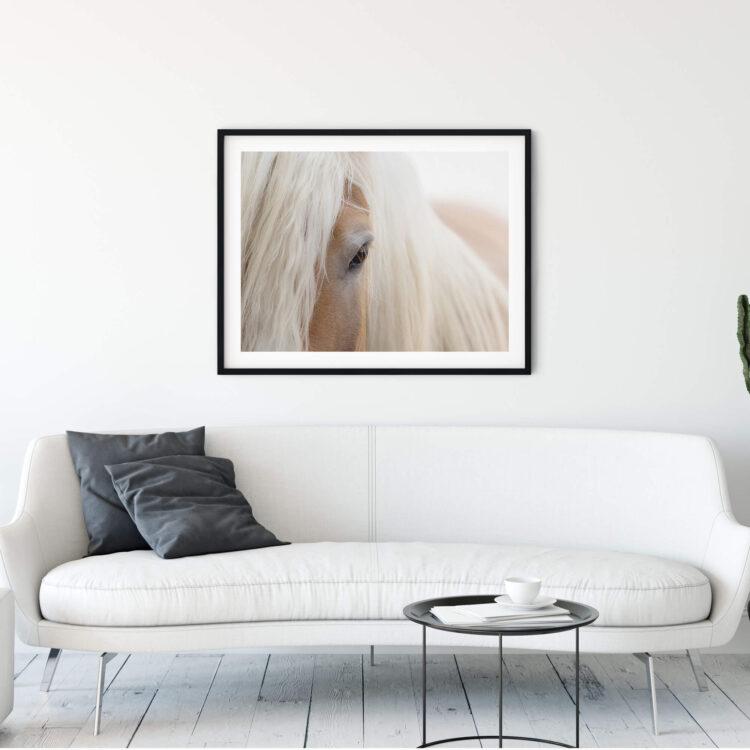 Portrait Haflinger Horse Poster photography Noanahiko 0180