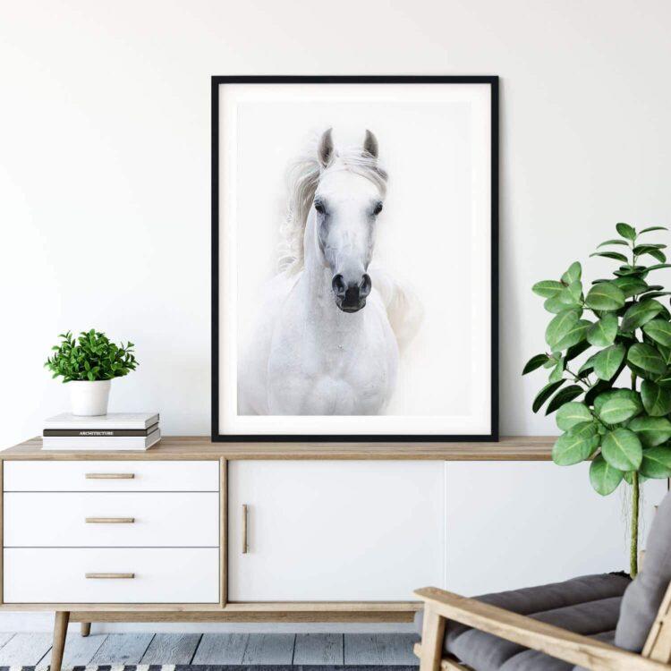 White Arabian Horse Poster Noanahiko print 0090