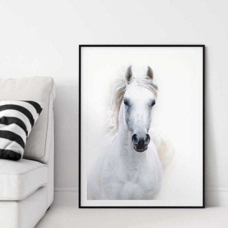 White Arabian Horse Poster Noanahiko wall Art 0090 1