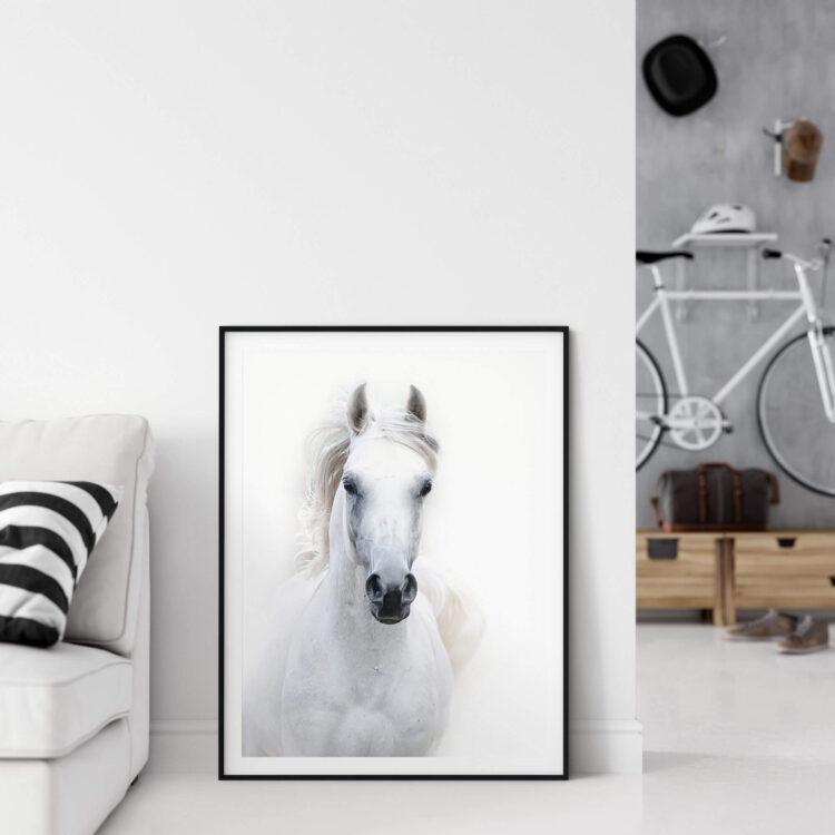 White Arabian Horse Poster Noanahiko wall Art 0090