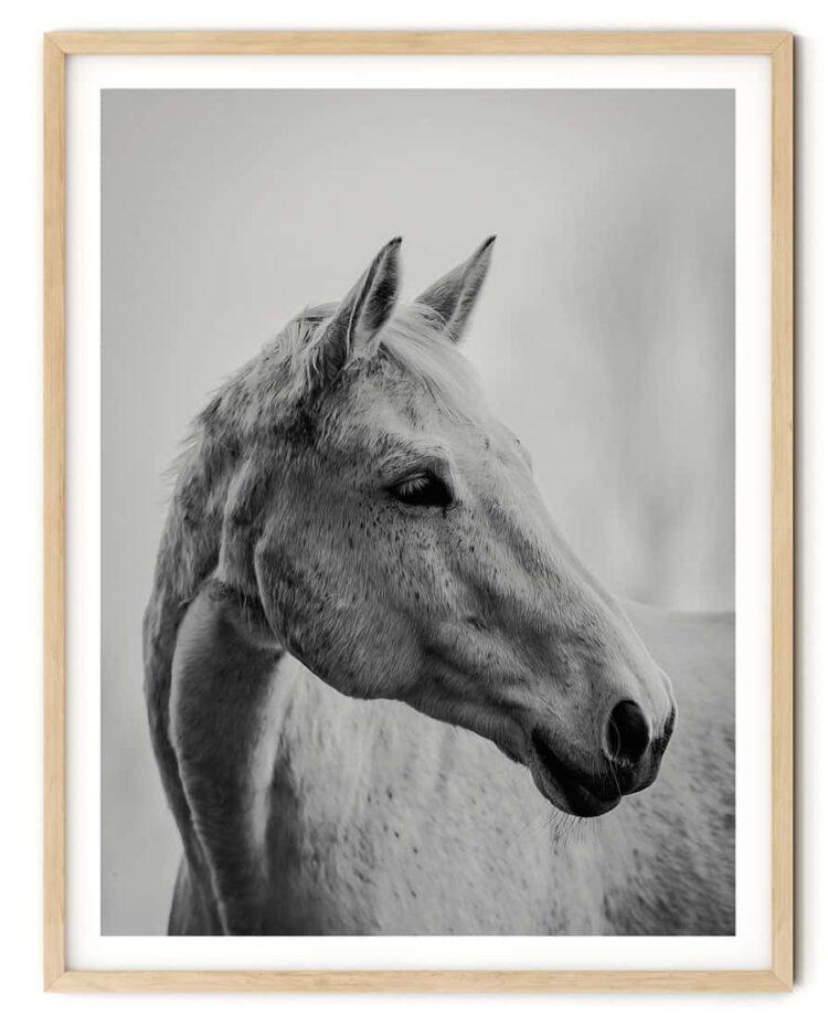 White Horse Poster noanahiko photography