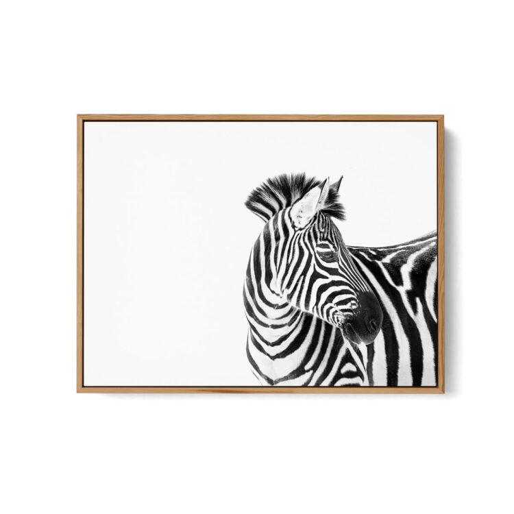 Zebra Animal art print poster 0117