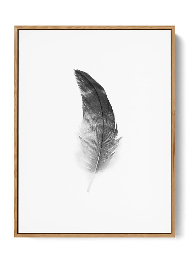 Black Feather Poster