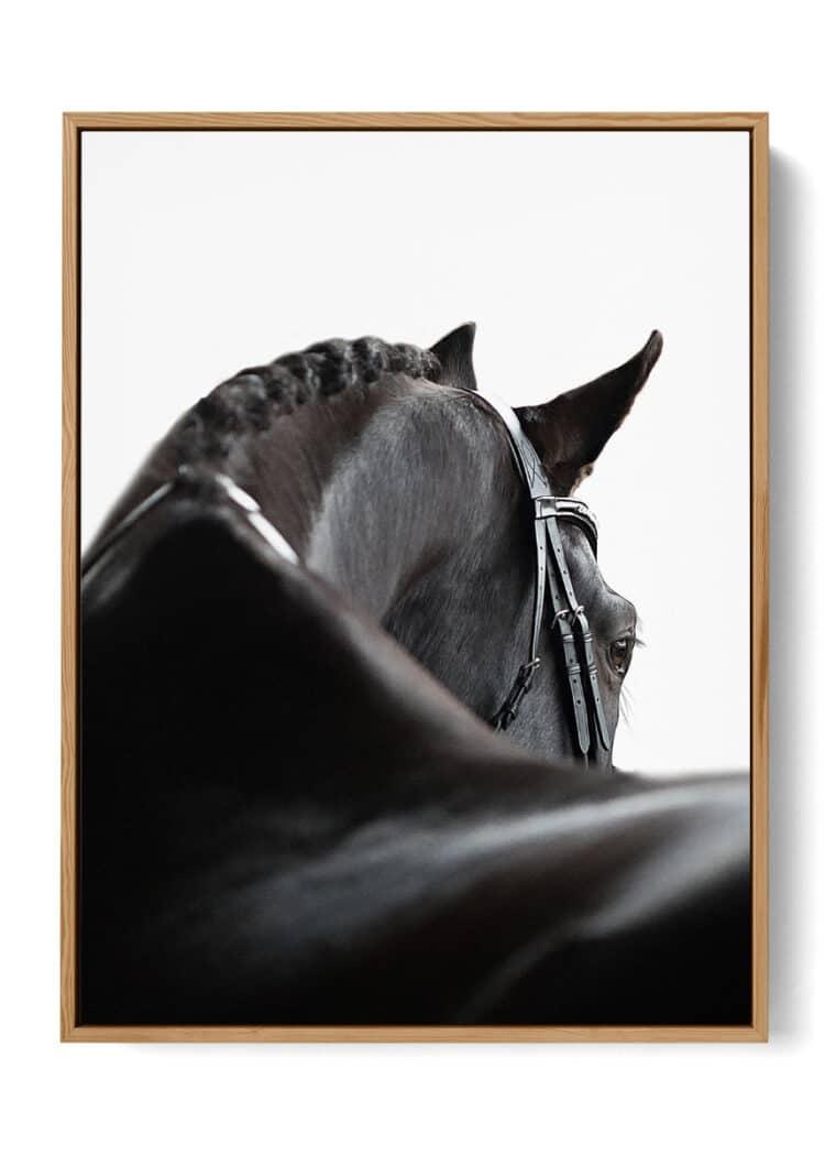Black Horse Art Print Poster