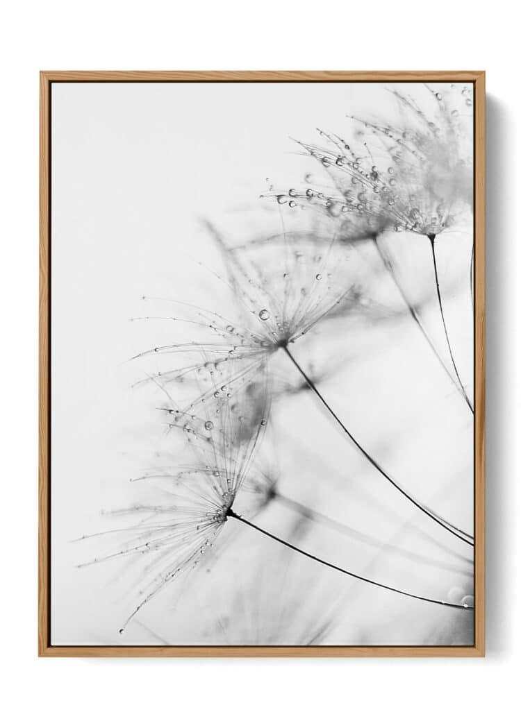 Dandelion Black White Poster
