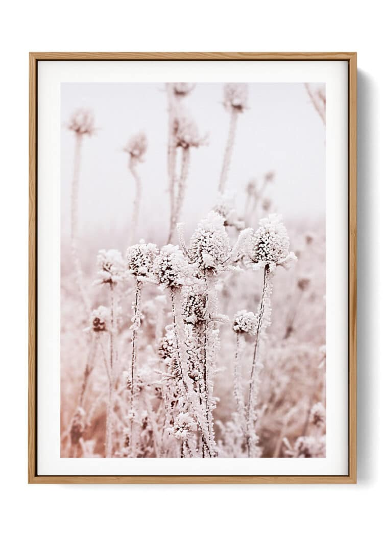 Frosty Dry Herb Poster