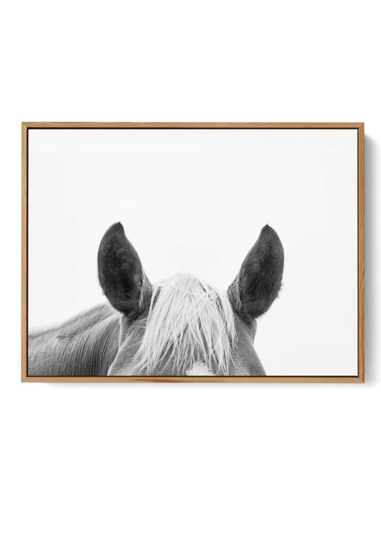 Horse Black White Poster