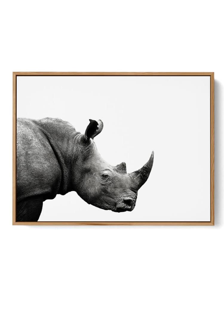 Rhinoceros African Poster