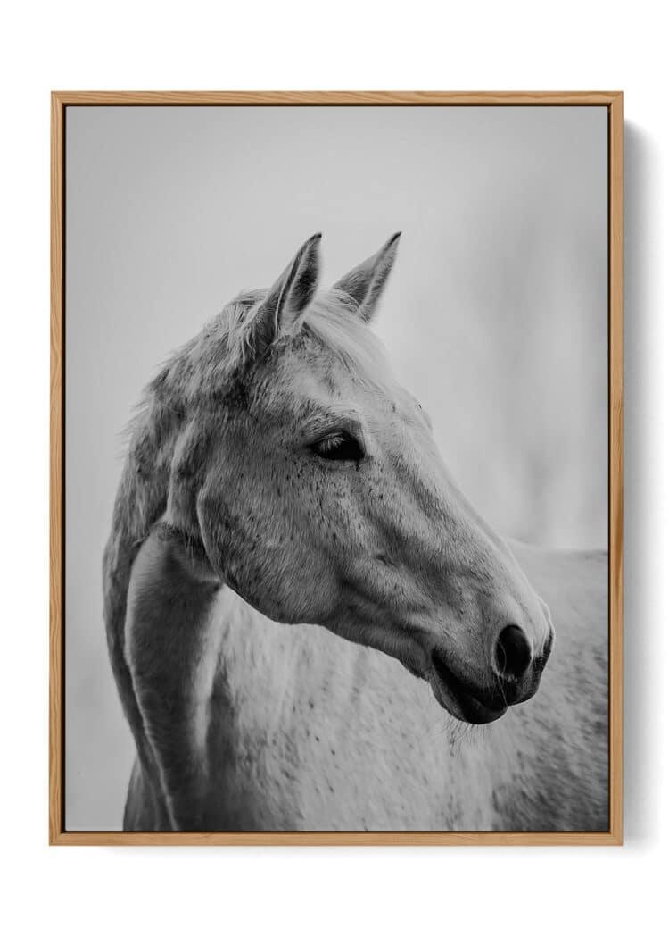 White Horse Art Print Poster