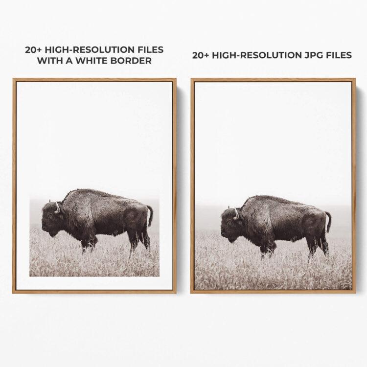 American Buffalo Bison Poster Noanahiko Art Print 0200