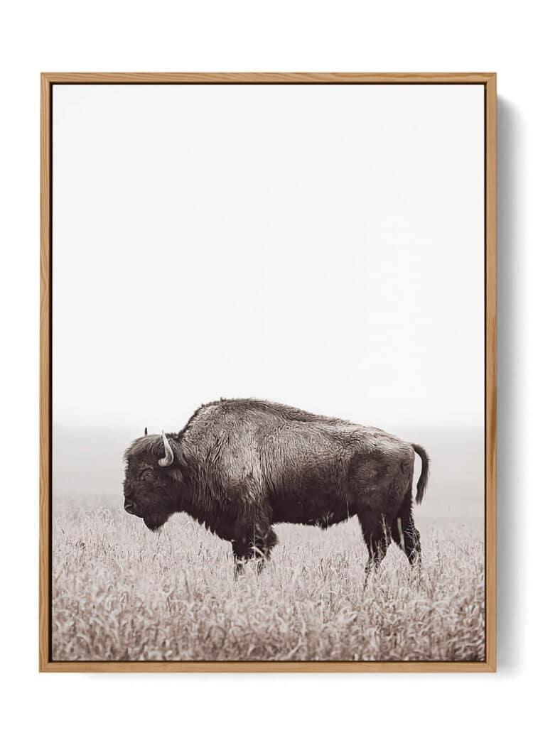 American Buffalo Bison Poster Noanahiko Art Print W 0200