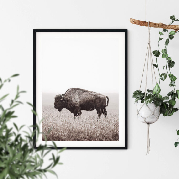 American Buffalo Bison Poster Poster Noanahiko 0200