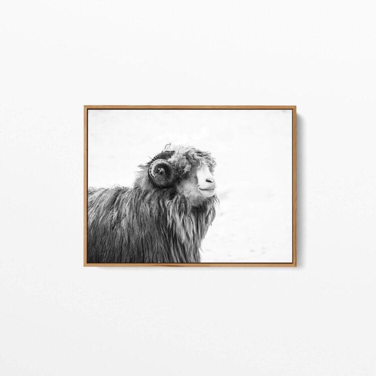 Farm Animal Noanahiko Printable 0131 1