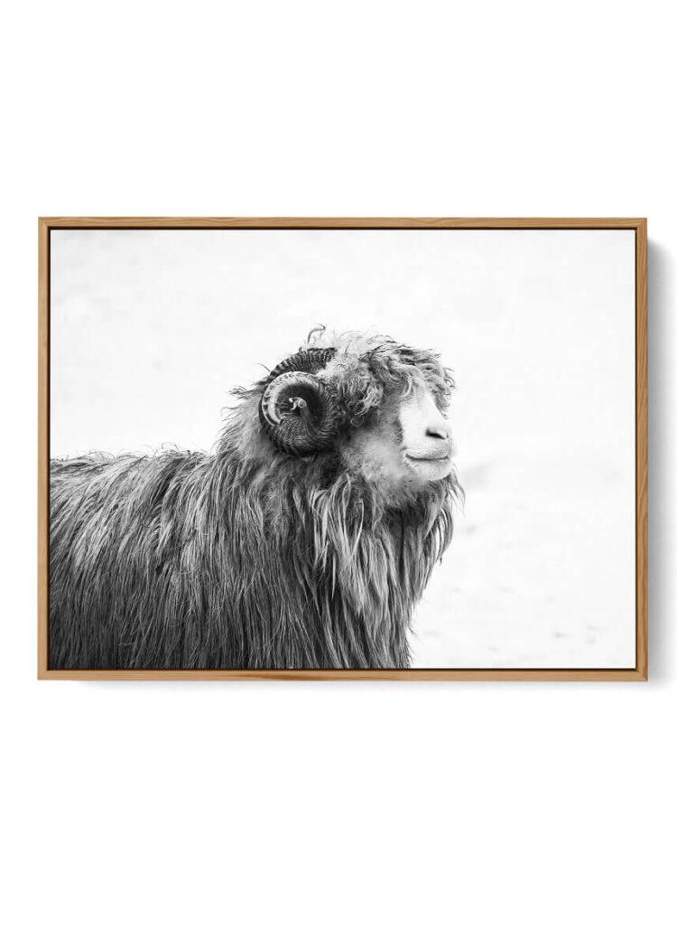 Farm Animal Poster Noanahiko W 0131