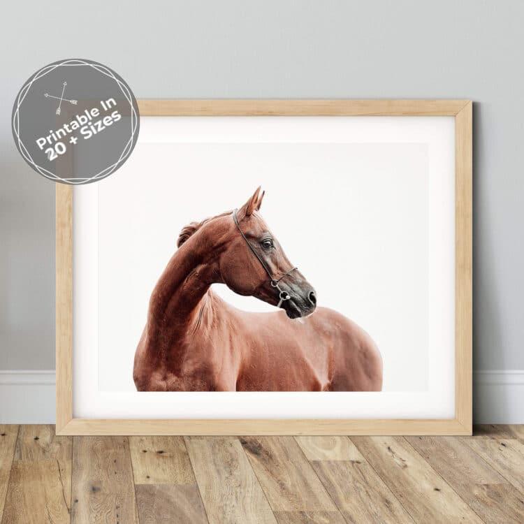 Horse Poster photography Noanahiko 0191