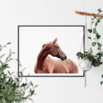 Horse art print Noanahiko Photo Print 0191