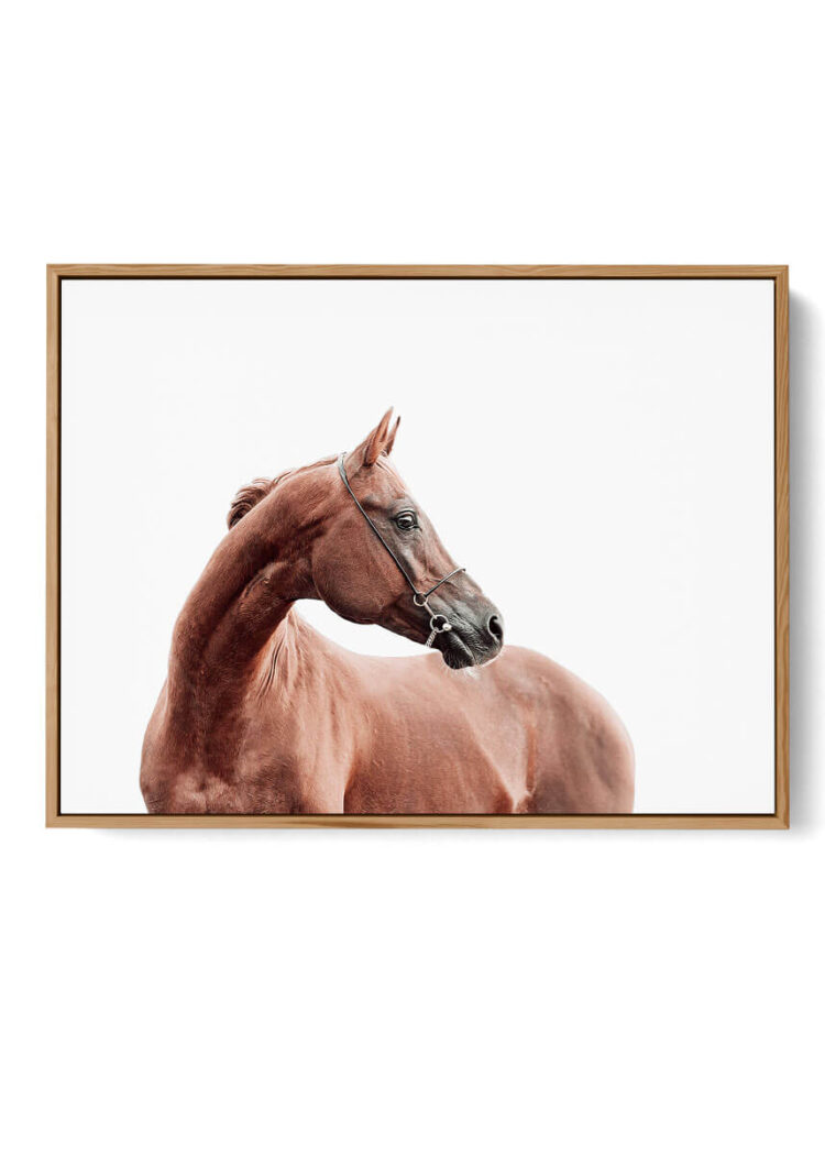 Horse poster print Noanahiko 0191