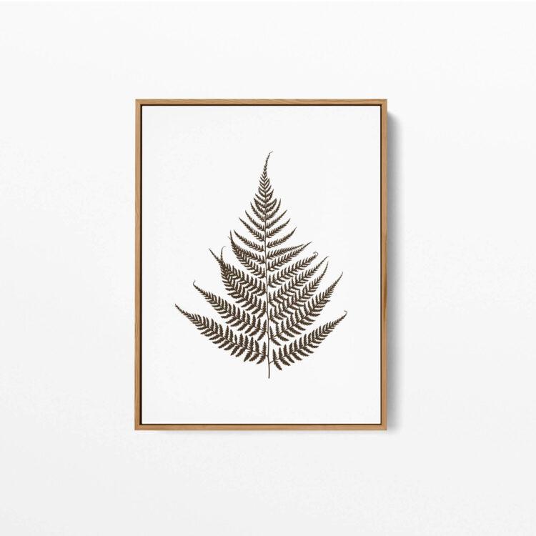 Set 3 prints Fern Leaves Noanahiko Art Print 0133