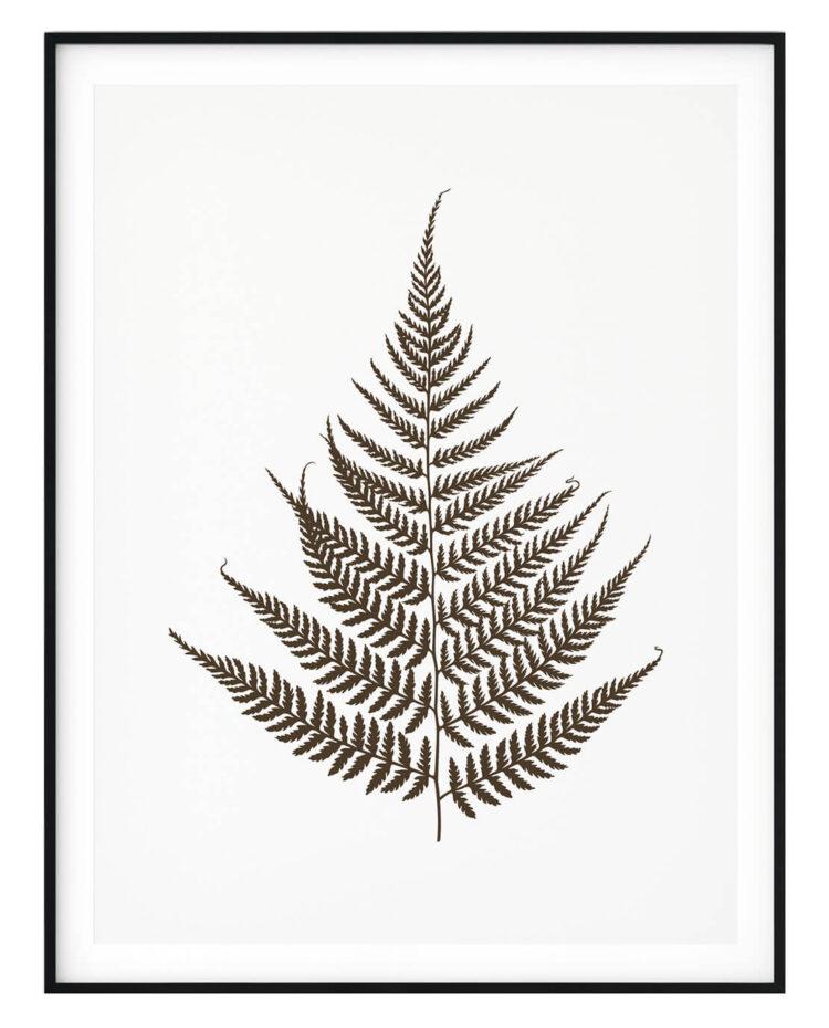 Set 3 prints Fern Leaves Poster photography Noanahiko 0133