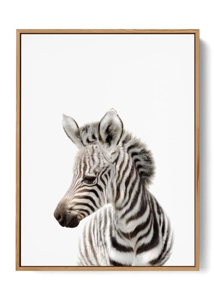 baby animals zebra art prints